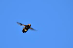 DSC 9085-Fliege-BEWEGUNG-BODEN